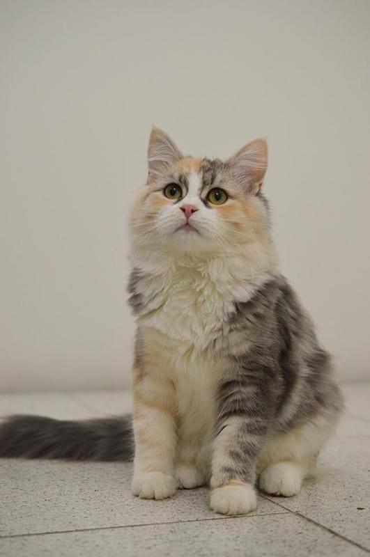 7f/billie-the-cat-7f.jpg