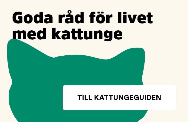 Arken Zoo Kattungeguide