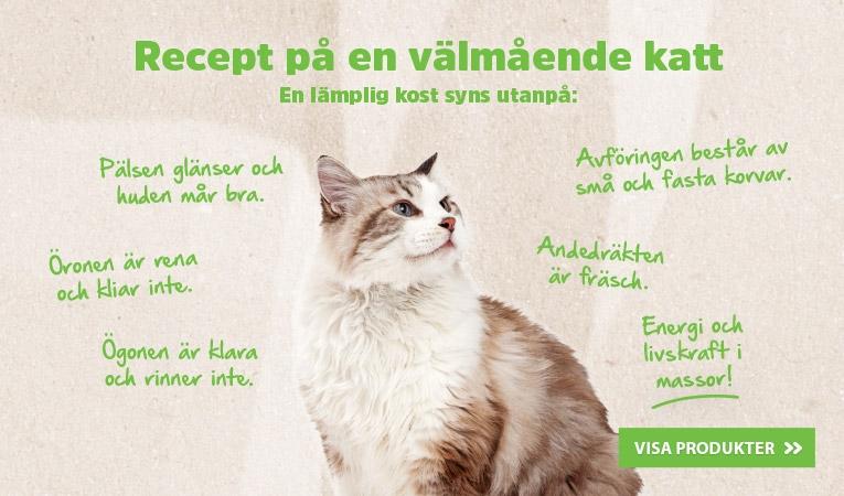 Recept på en välmående katt