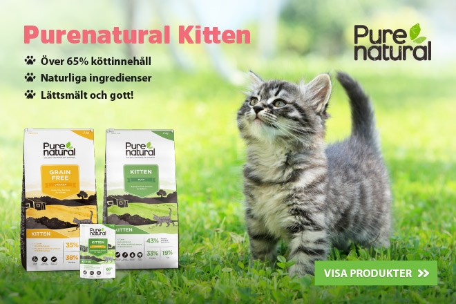 Purenatural Kitten