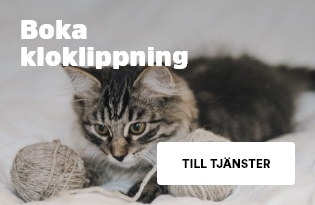 kloklippning kattunge