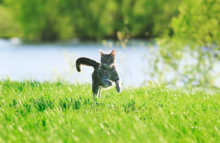 Aktivera katt