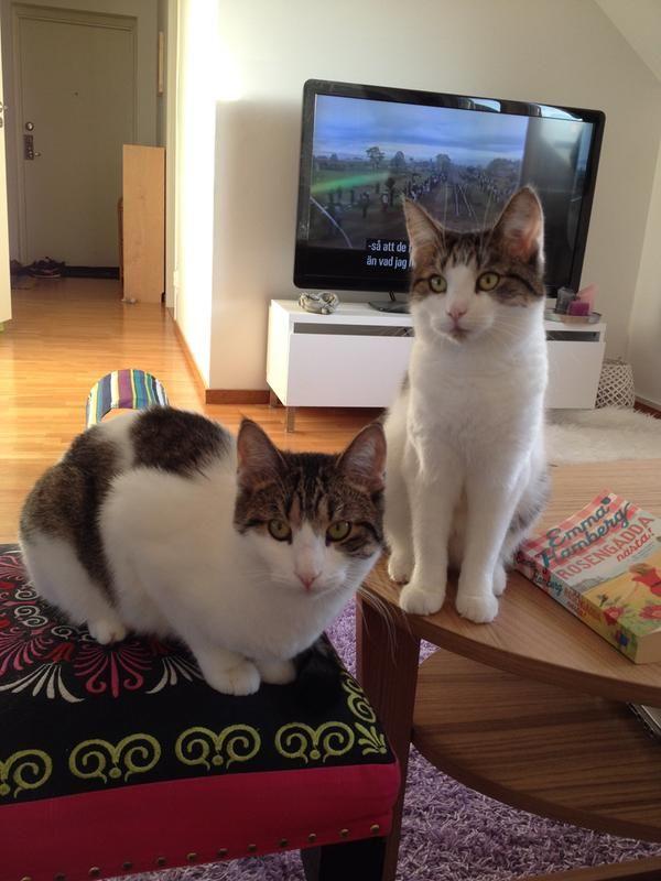 98/vara-gulliga-katter-98.jpg