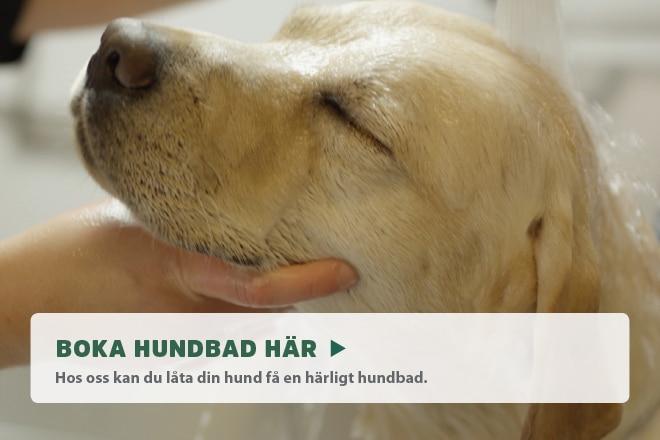 Boka hundbad online!