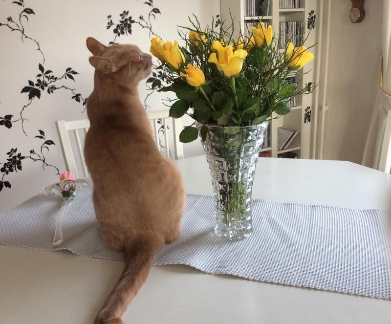 a4/alskar-mina-blommor-a4.jpg