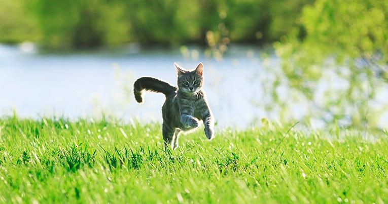 Avmaskning katt