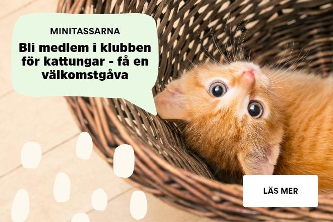 Arken Zoo Minitassarna