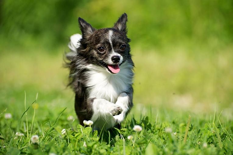 Eliminationsdiet hund