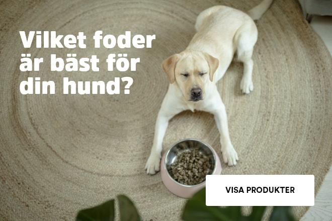 Varför ska du ge din hund kvalitetsfoder?