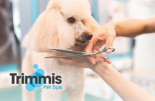 Trimmis Pet Spa
