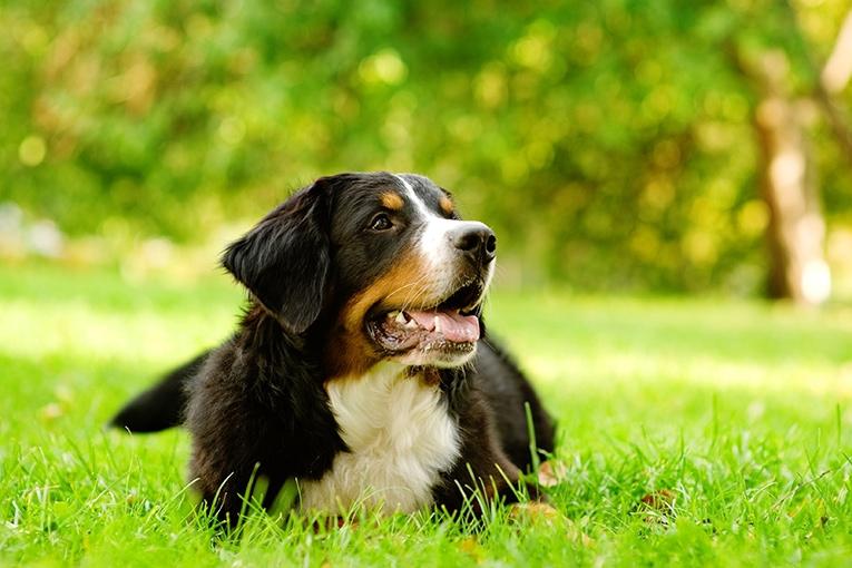 Färskfoder till hund
