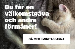 Minitassarna - Klubben för kattungar