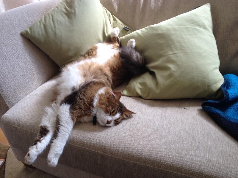 d0/katt-som-njuter-av-livet-d0.jpg