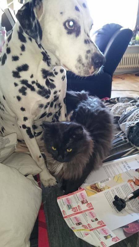 d7/den-lilla-katten-myser-med-hunden-d7.jpg