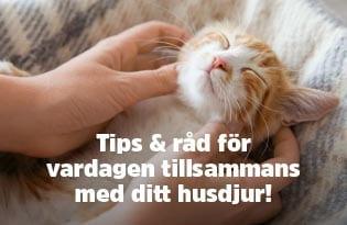 Tips och råd för vardagen tillsammans med ditt husdjur!