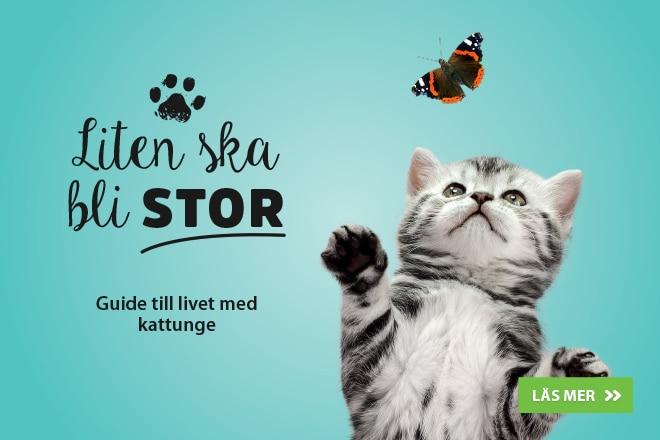 Liten ska bli stor - Guide till livet med kattunge