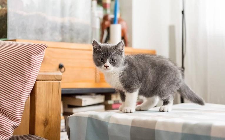 Ta hand om din kattunge