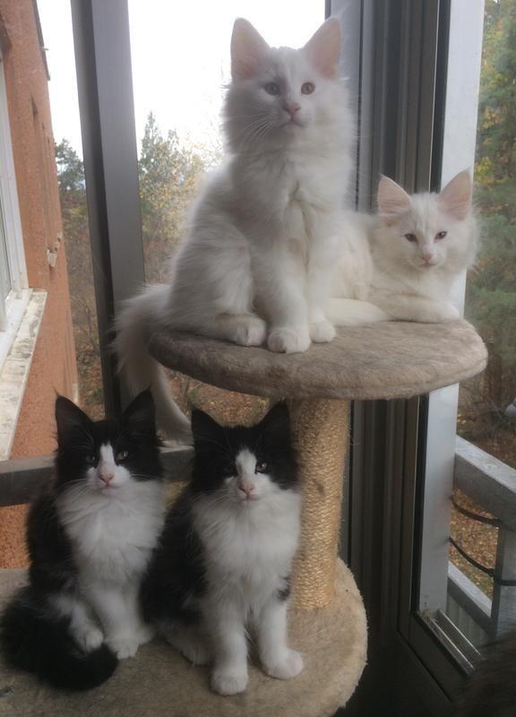 eb/en-av-mina-37-kullar-som-fotts-upp-pa-royal-canin-babycat-kitten-eb.jpg