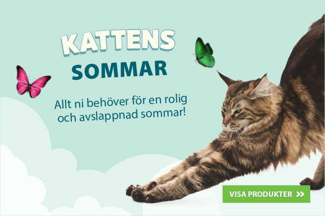 Kattens sommar
