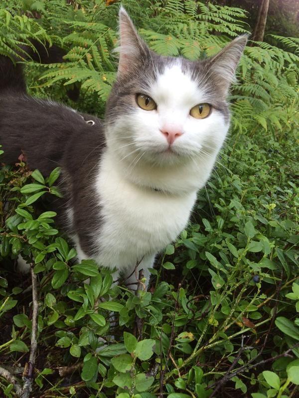 f5/katten-svante-pa-skogspromenad-f5.jpg