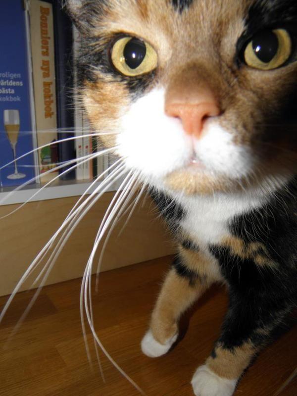 f6/nyfiken-och-valmaende-katt-f6.jpg