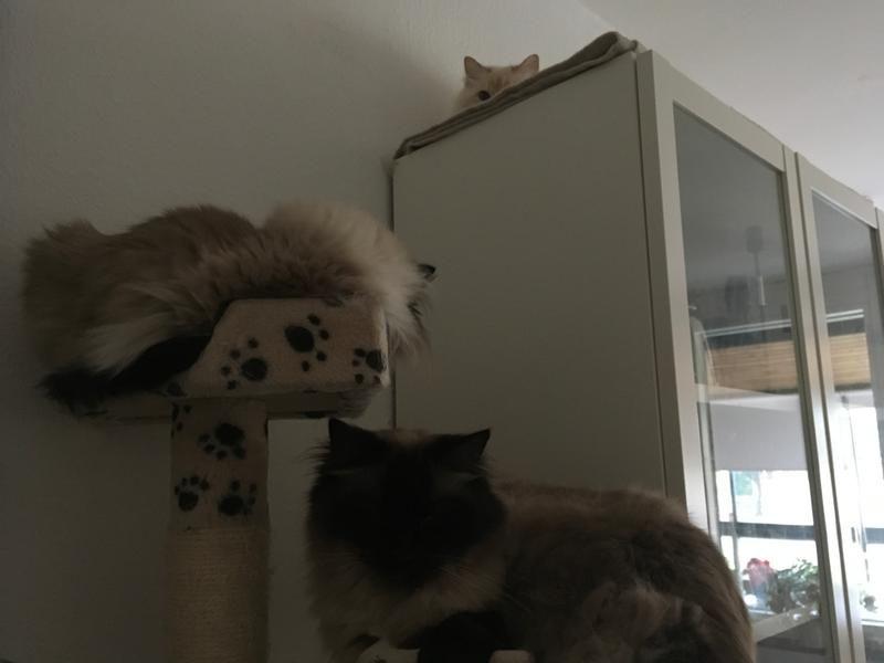 f6/tre-av-mina-fyra-katter-f6.jpg