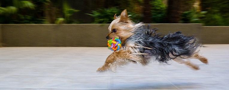 Aktivera hund