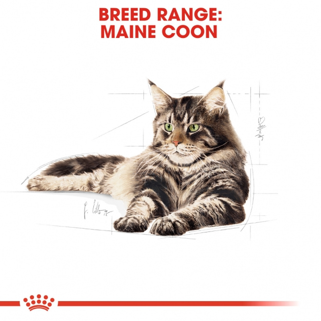 Royal Canin Maine Coon