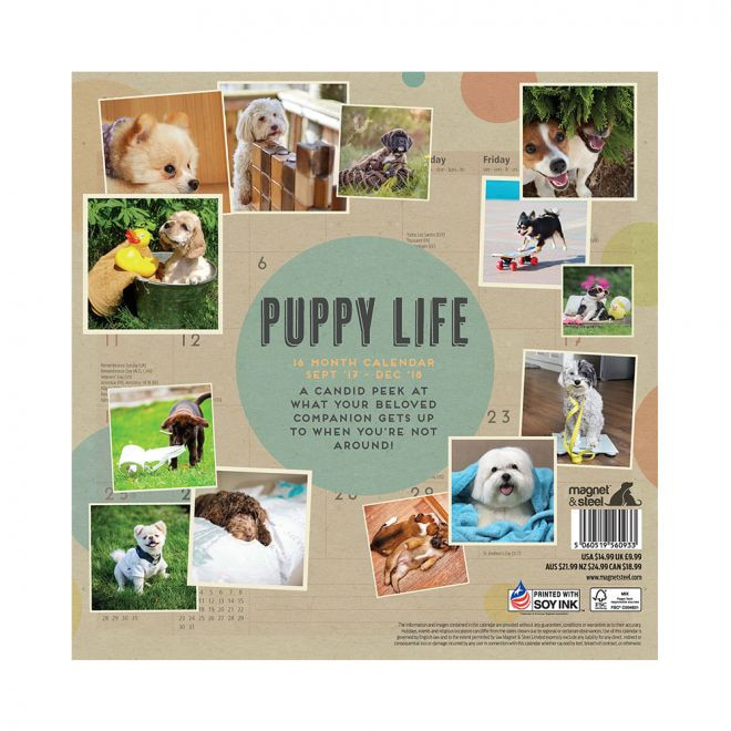 Magnet&Steel 2018 Kalender Puppy Life**