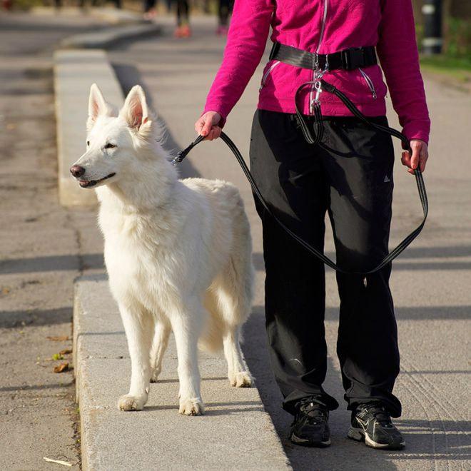 Pro Dog Koppelbälte (L)**