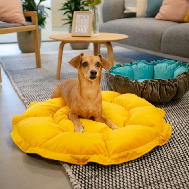 Little&Bigger Multifunctional Hundbädd Brun & Orange