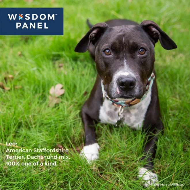 Wisdom Panel Canine DNA-test för hund