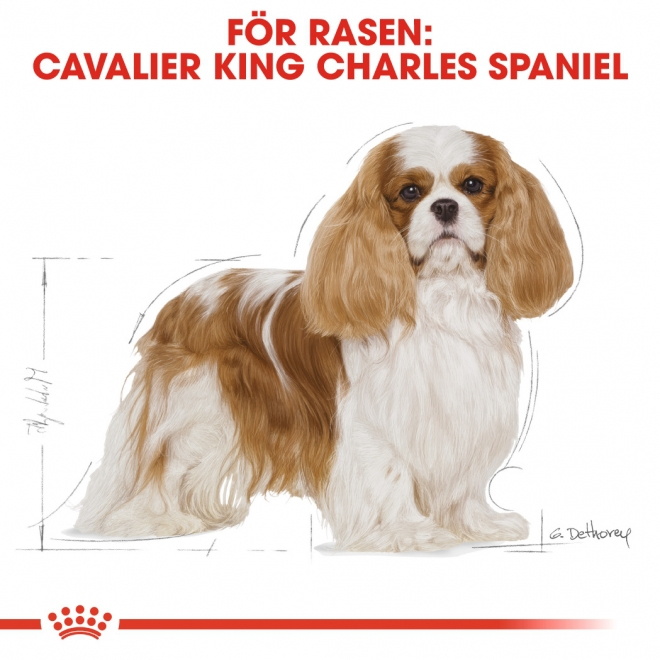 Royal Canin Breed Cavalier King Charles Spaniel