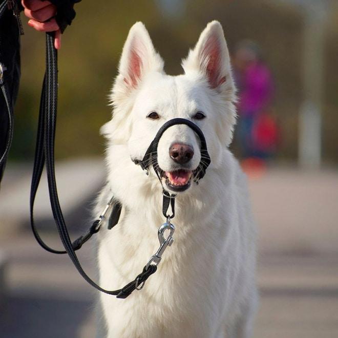 Pro Dog Dressyrnossele