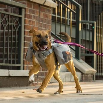Koiran reppu RuffWear Commuter Pack