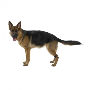 Jalkapaino koiralle Kruuse Rehab