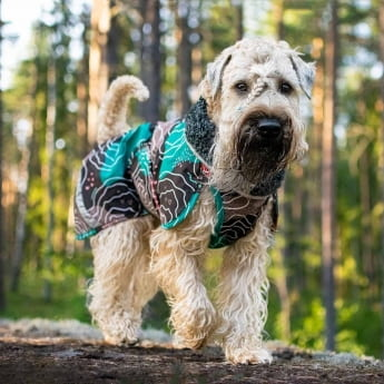 PerusPomppa koiran takki, kartta