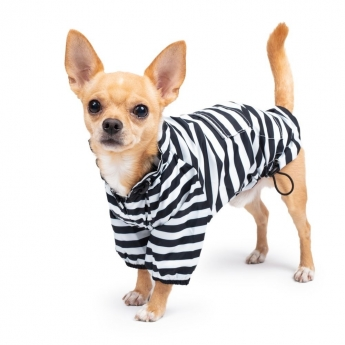 Koiran takki ItsyBitsy Breezy vankikarkuri