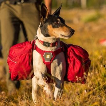 Koiran reppu RuffWear Palisades Pack