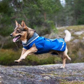SadePomppa koiran takki, sininen