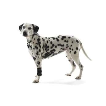 Rannetuki koiralle Kruuse Rehab