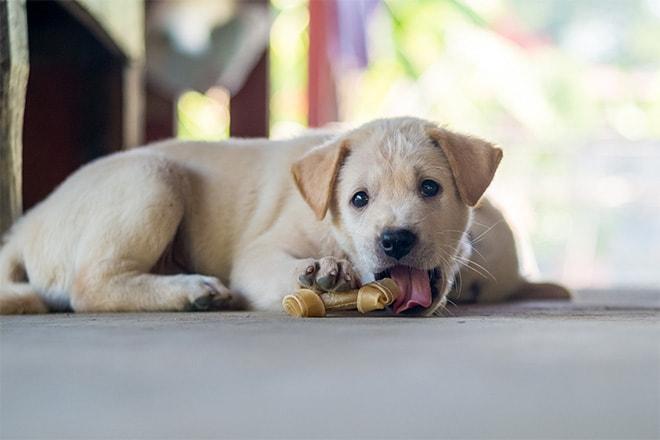 Koiran luut ja koiranherkut