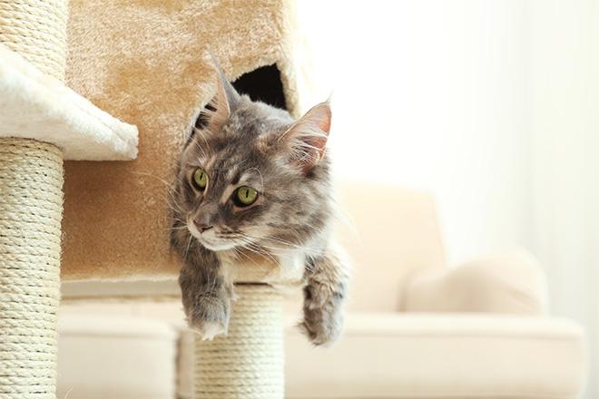 Kissan kiipeilypuut ja raapimatolpat