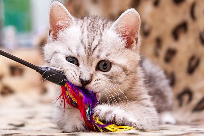 Kissanlelut