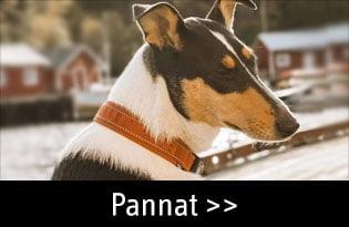 koiran pannat