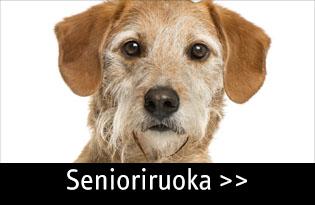 senioriruoka koiralle