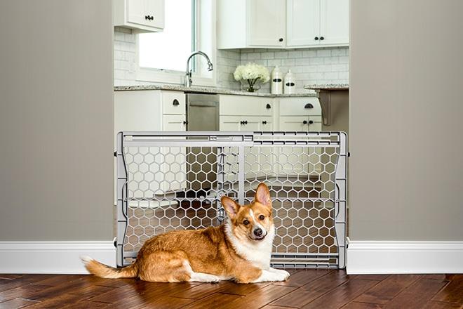 Koiran häkki, koira-aita, oviportti