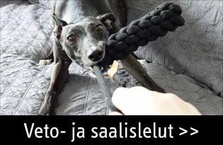 Koiran veto ja saalislelut