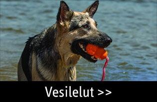 Vesilelut koiralle
