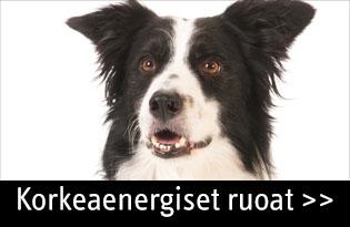 korkeaenerginen ruoka koiralle